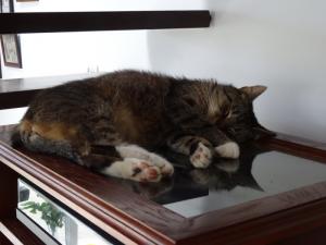 skarpeciarz spi