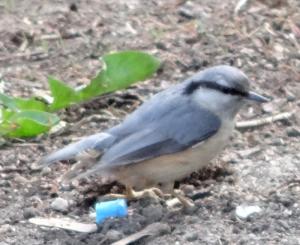ptak1