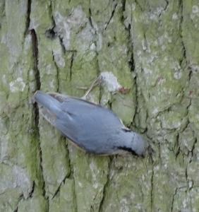 ptak2